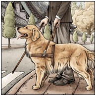 光明伙伴·导盲犬